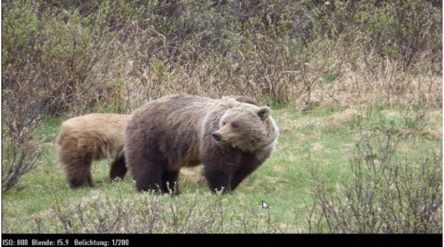 Beispielbild aus einer Panasonic DMC FZ72. Man kommt nah an so manches Wildtier heran. Dafür wirken die Farben ein wenig verwaschen. Bild: Panasonic