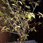 Blitzlichtbild einer Balkonpflanze mit dem Moto G5 geschossen.