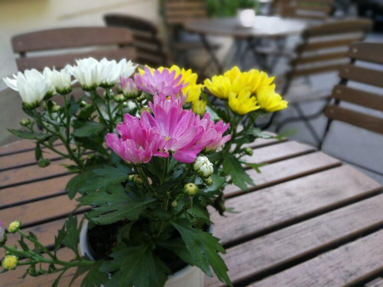 Blumenstrauß, Hintergrund unscharf. Farben sind tatsächlich die Stärke der Kamera im Huawei P10.