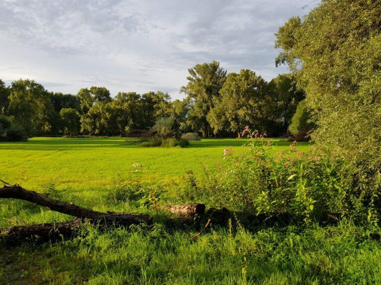Naturfoto bei Tag mit dem Galaxy S8