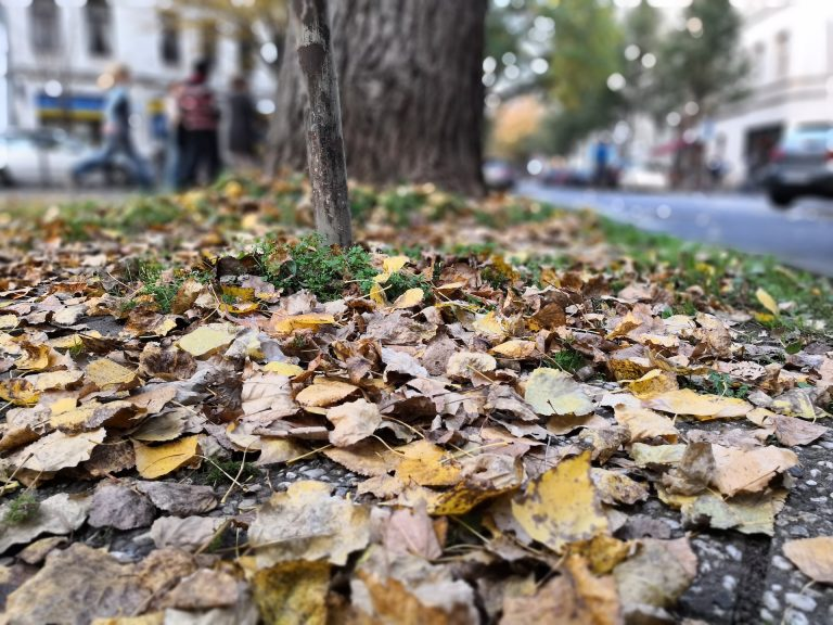 Blätterhaufen ohne KI fotografiert.