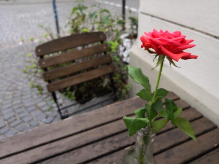 Blume mit KI aufgenommen.