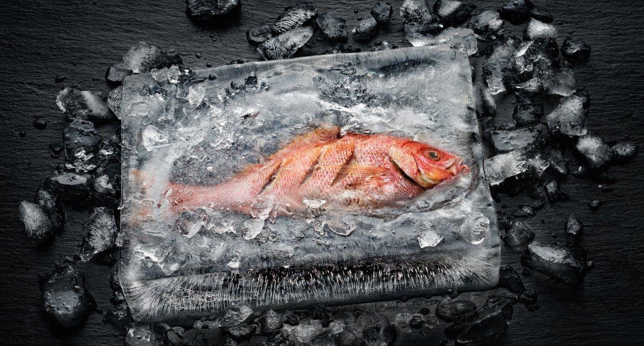Der Dialoggarer von Miele gart einen Fisch im Eisblog (Bild: Miele)