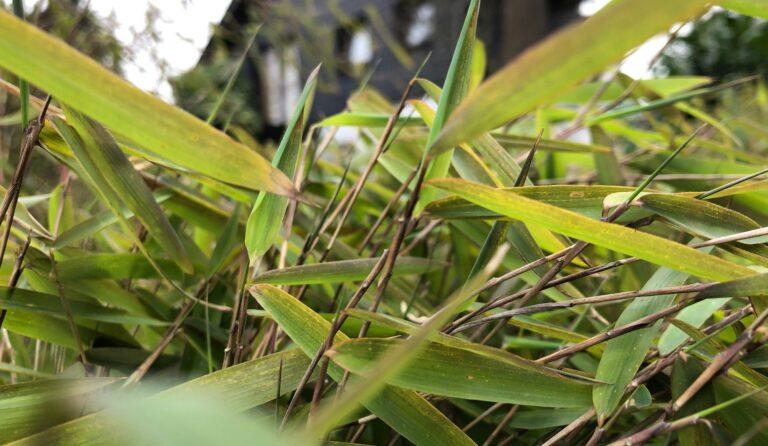Hier ist der Mittelgrund scharf, die Blätter ganz vorne sind unscharf, ebenso der Hintergrund. Allerdings erkennt der Betrachter noch sehr gut, dass dort ein Haus zu sehen ist.