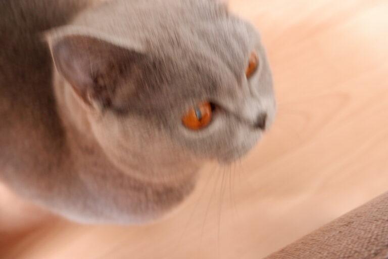 """Unscharfes Katzenfoto: Hier bewegte sich """"das Motiv"""" zu schnell für den Autofokus der Fuji X-A5."""