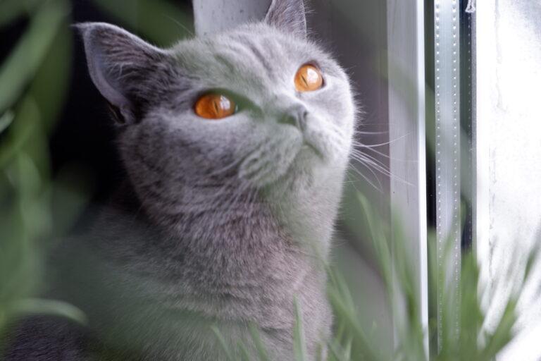 Katze durch den Vordergrund fotografiert. Der Autofokus hatte hier allerdings seine Mühe