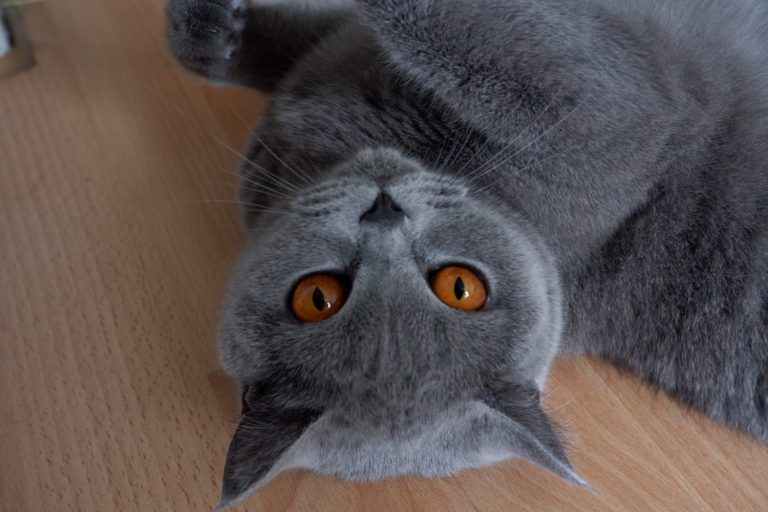 Mein Liebslingsbild mit der X-A5. Hier hielt die Katze aber auch endlich mal still.