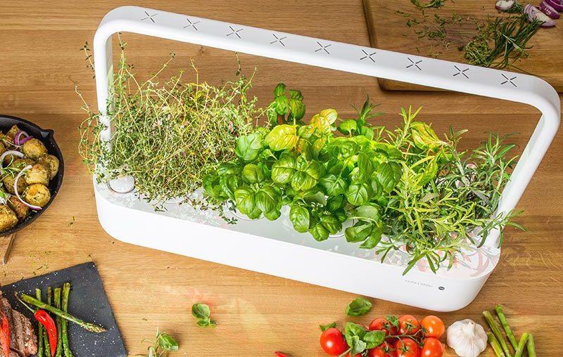 Smart Indoor Garden: Winzige Gärten für eure Wohnung