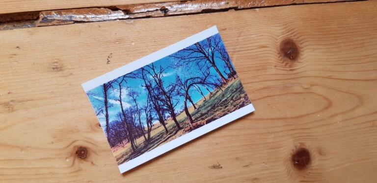 Auch schöne Fotos können entstehen - das druckte der Minidrucker Kodak Smile aus. (Foto: Sven Wernicke)