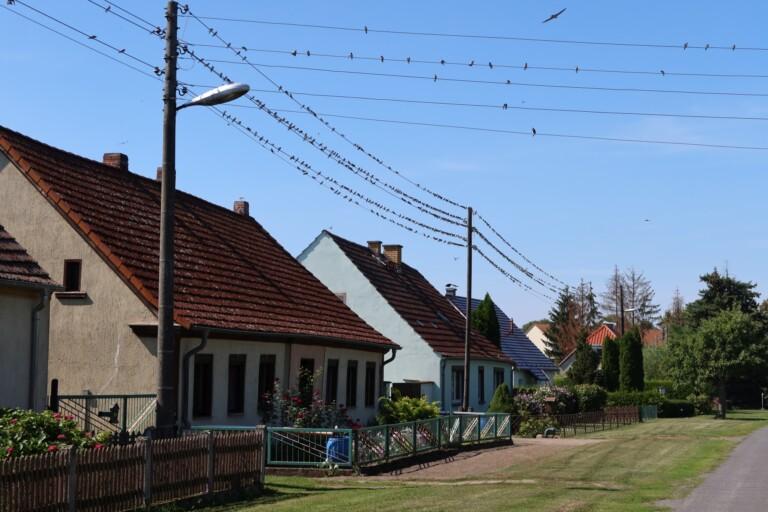 Die Vögel auf den Strommasten - hier konnte man auf dem Smartphone-Bild kaum noch was erkennen. (Foto: Sven Wernicke)