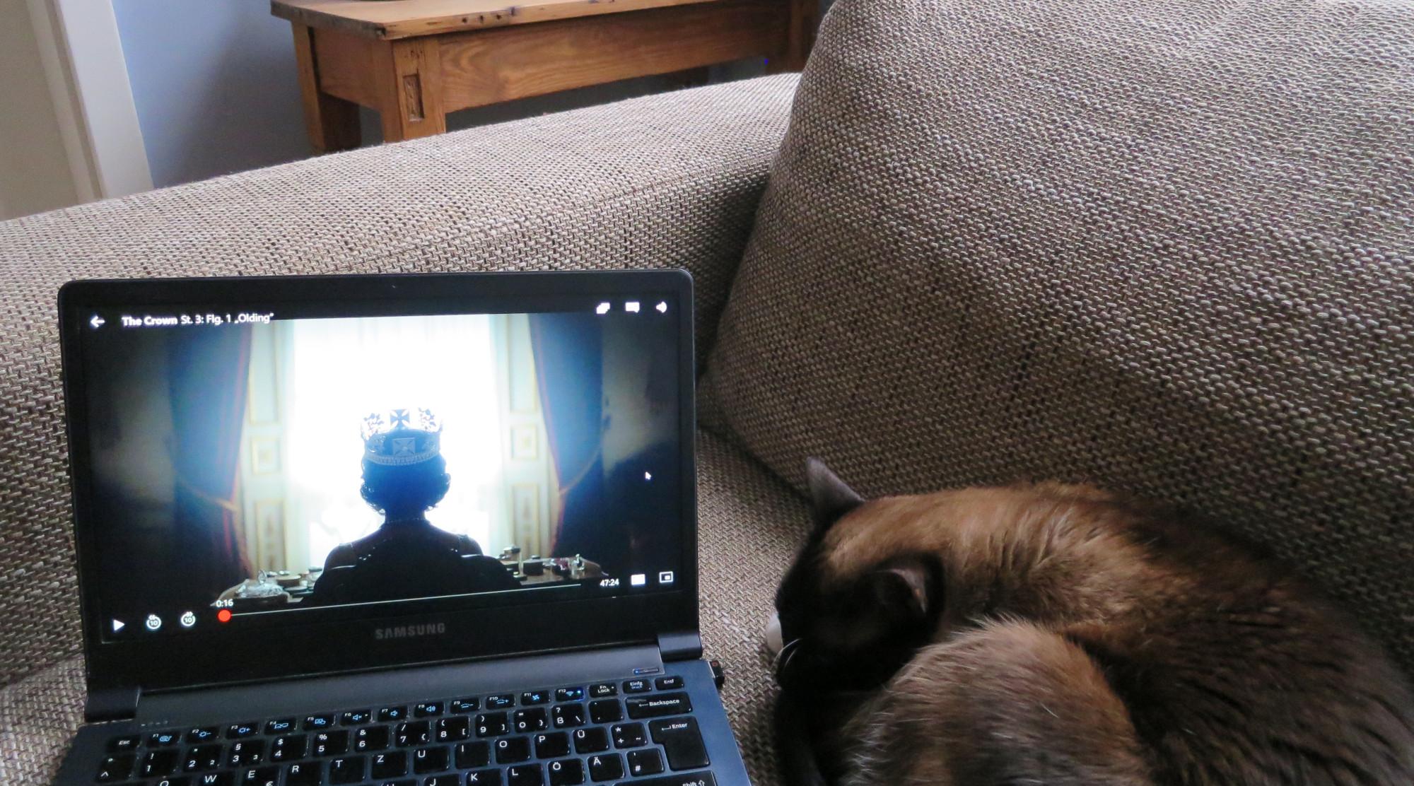 Notebook und Katze auf dem Sofa