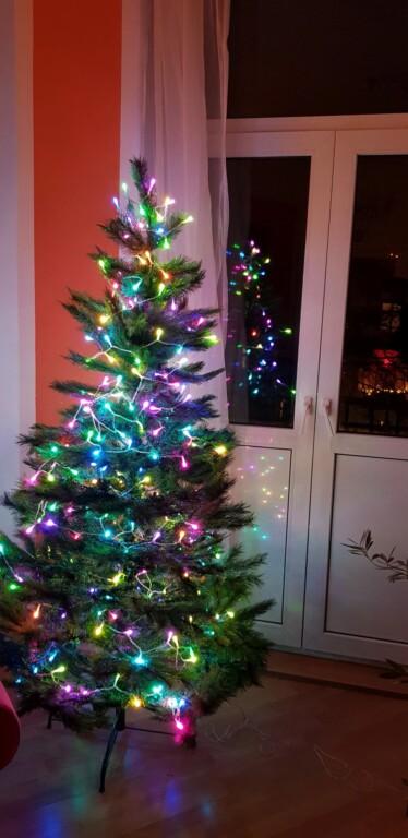 Der Baum in voller Pracht. (Foto: Sven Wernicke)