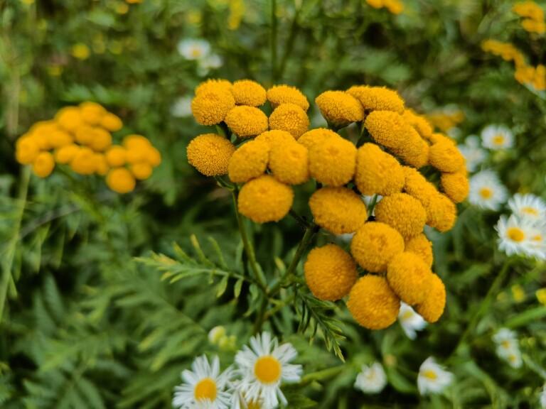 Das Telefon erkannte einen Blumenstrauß. Perfekt ist der Autofokus nicht immer. (Foto: Sven Wernicke)